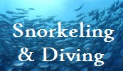 Scuba diving and Snorkeling businesses on The Big Island