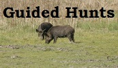 Guided Hunting trips