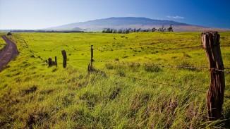 fields of green grass
