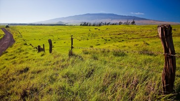 fields-of-waimea-Hawaii