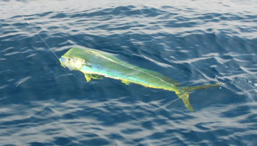 Fishing Charter Big Island Hawaii