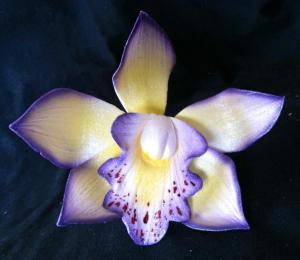flowered orchid