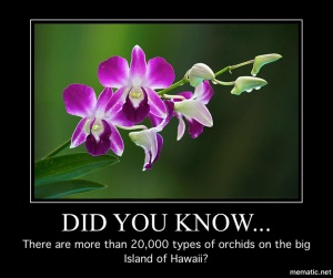 20,000 orchids in Hawaii