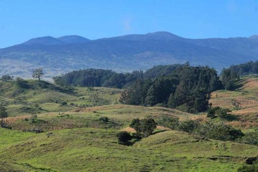 Fields of Pa'auilo, Hawaii